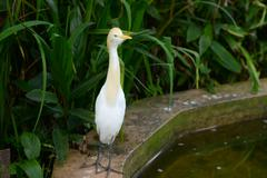 Stock Photo of White heron in nature park