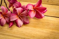 Red frangipani placed on a wooden floor. Stock Photos