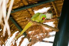 Little parrots in nature park Stock Photos
