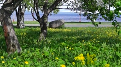 Trees and lake in city park Stock Footage