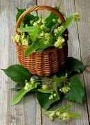 Linden-Tree Blossom - stock photo