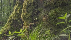 Tree With Moss And Covered With Fungi 06 Stock Footage