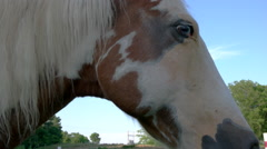 Horse Stare-off - stock footage