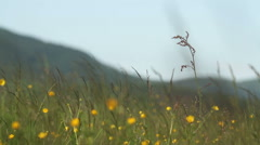 Summer flowers and grass Stock Footage