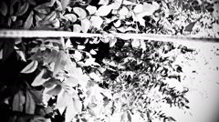Camera spinning fast through tree in low angle shot - stock footage