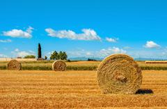 crop field in Spain with round straw bales after harvesting - stock photo