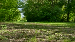 Grassy path in the woods Stock Footage