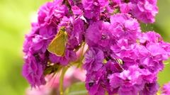 Butterfly on pink Stock Footage