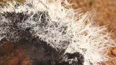 Close up shot of abstract fur background Stock Footage