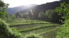 Vegetable garden in spectacular mountain lit by the sun Stock Footage