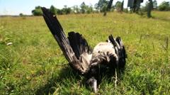 Bird flu Stock Footage