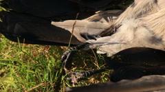 Feet of dead birds Stock Footage