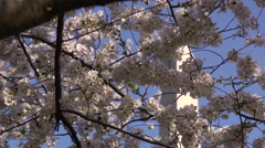 Cherry Blossoms & Washington Monument Stock Footage