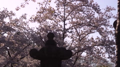 Cherry Blossoms & Japanese Lantern Stock Footage