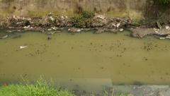 Muddy stream in dyke. crap floats, camera pan up to the building on bank Stock Footage