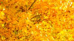 Autumn leaves fall trees nature background Stock Photos