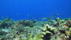 Coral reef with redfin breams Stock Footage