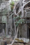 Tree roots overwhelm ancient temple Stock Photos
