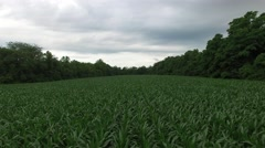 Indiana Corn Field 4K Stock Footage