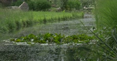 Green Island Of Lilies' Circular Glossy Leaves at the Pond, People Are Walking Stock Footage
