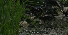 Stock Video Footage of Swampy Pond With Stony Banks, Water Stream Into the Pond, Closeup