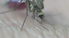 Mosquito insect macro sits on skin and blood of pet Stock Footage
