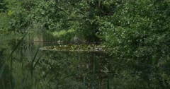 Stock Video Footage of Swampy Pond, Wide Shot, Trees' Branches Upon the Water