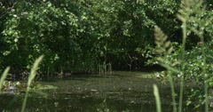 Swampy Overgrown Pond, Wild Grass, Trees Stock Footage