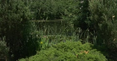 Swampy Overgrown Pond with Green Islands of Water Plants Stock Footage