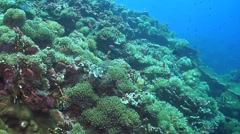 Soft and hard corals Stock Footage
