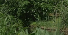 Pond, Bank of The Pond, Overgrown by Bushes And Trees Stock Footage