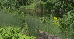 Overgrown Pond, River, Banks Stock Footage