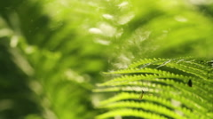 Summer fern with mosquito crane-fly Stock Footage