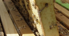 Stock Video Footage of Steadicam shot of Slow Motion Honey Bees in the Hive - Beekeeping