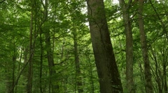 Trees trunks in mixed forest slow dolly shot Stock Footage