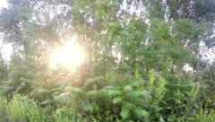 Sun Glimmering through Ferns tracking, dolly shot. UHD 4K stock footage Stock Footage