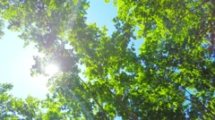 Moving under canopy of trees, camera looks up Stock Footage