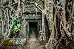 Travel Cambodia concept background - ancient stone door and tree roots, Ta Pr - stock photo