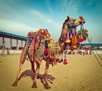 Camel at Pushkar Mela,  Rajasthan, India - stock photo