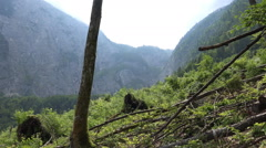 Austria alp meadow pathway pan mountains and lake - stock footage
