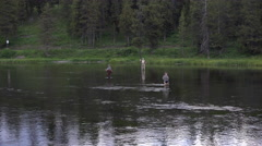 Fly fishing river in Yellowstone National Park 4K Stock Footage