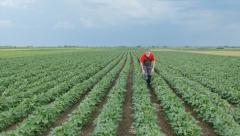 Agriculture farmer or agronomist in soybean field Stock Footage