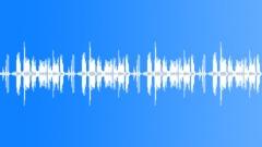 Birds Sing in the Forest Grove - ambient, denoised loop 02 Äänitehoste