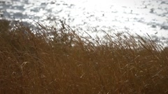 Illuminating the dune grass, beach and sunlight on the sea Stock Footage