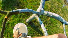 Whitewashing orchard tree with a lime powder Stock Footage