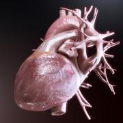 human heart anatomy on black background - stock illustration