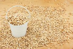 White bucket with pearl barley on the wooden floor - stock photo