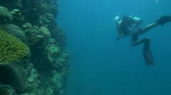 Diver on wall. Great Barrier Reef Australia. - stock footage