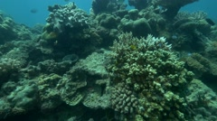 Stock Video Footage of School of Fish. Great Barrier Reef Australia.
