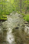 Tranquil Summer Stream Stock Photos